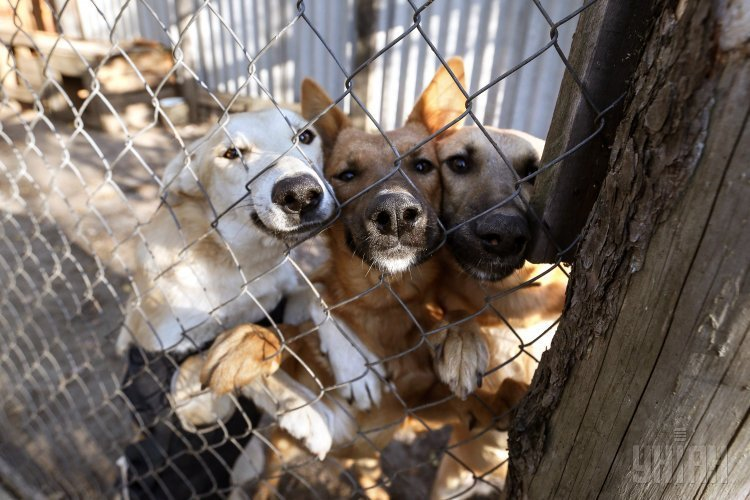 Приют для собак Лора