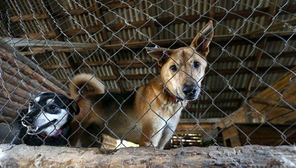 Итальянка добилась всуде пособия поуходу забольной собакой