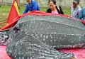 Во Вьетнаме похоронили гигантскую черепаху с почестями