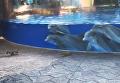 Белки и дельфины. Видео