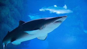 Жительница Австралии поймала акулу голыми руками