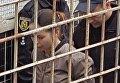 Елену Зайцеву доставили в суд