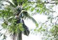 Мужчина жил на пальме три года