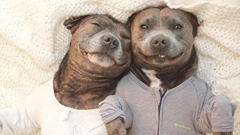 Братья-собаки