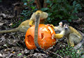 Хэллоуин в зоопарке