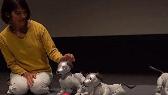 Японцы представили новое поколение робота-собаки