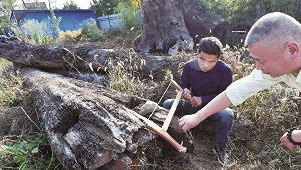 В Китае нашли редкий дорогостоящий кусок древесины