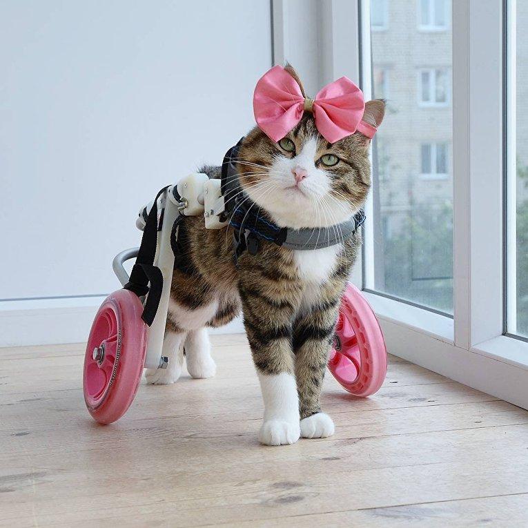 Харизматичный кот прославился благодаря необычному языку