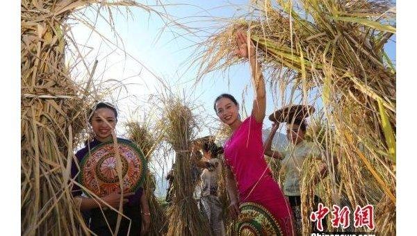 В Китае выращивают рис по $150 за килограмм