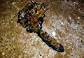 Неизвестное существо на берегу Крыма