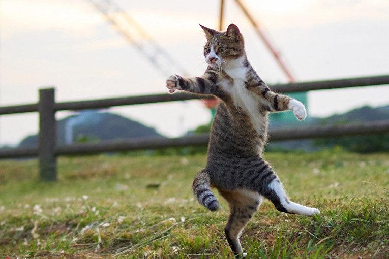 Японский фотограф снимает котиков кунг-фу