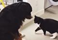 Так бы и затискал. Кот-хулиган пристает к собаке. Видео