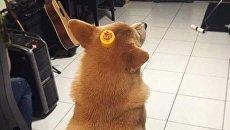 Очередной тренд китайских соцсетей – собачка-бутылка
