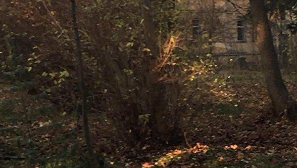 Во Львове загорелась психбольница