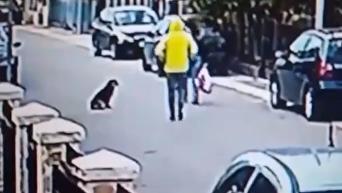 Четвероногий спаситель. Уличный пес спас женщину от грабителя. Видео