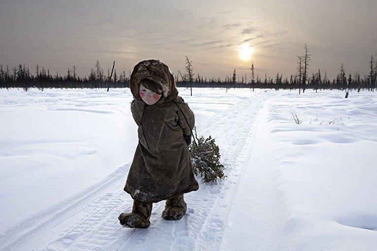 Фото девочки, помогающей своим родителям собирать дрова, было сделано на Ямале