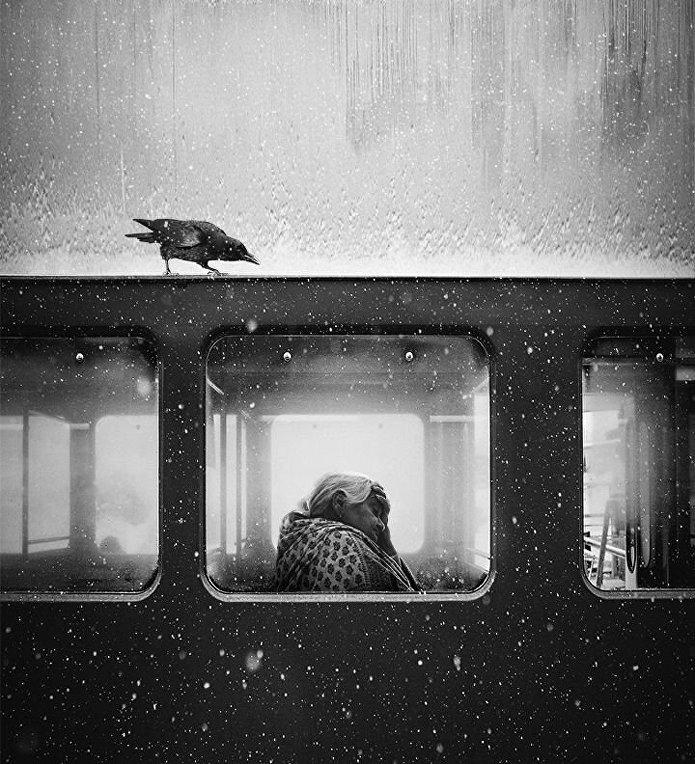 Снимок британского фотографа Джека Сэвиджа Ворона во Львове