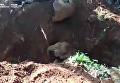 Появились кадры по спасению слоненка в Индии. Видео