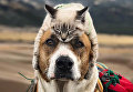 Кот и пес путешественники