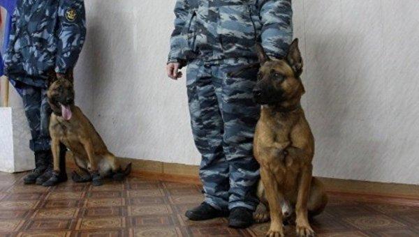 Клонированные овчарки на службе в российской службе исполнения наказаний