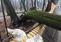 В Черновцах упавшее дерево травмировало школьника