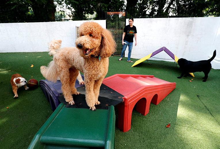 Люксовый отель для животных в Сингапуре