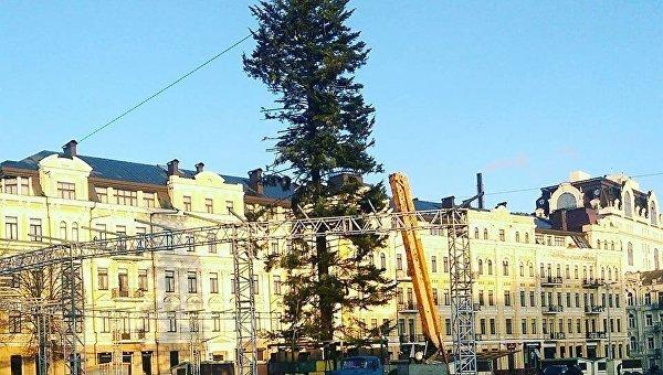 Главная елка Украины облысела и лишилась части веток