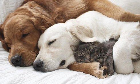 Дружба собак и кота