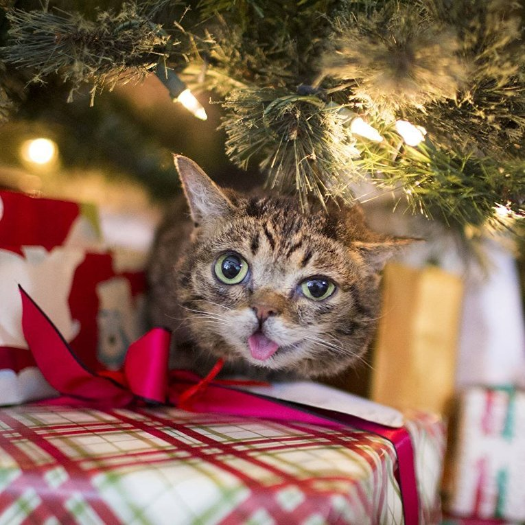 Самая удивительная кошка Лил Баб
