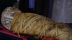 Врачи обнаружили у египетской мумии рак через 2000 лет после смерти