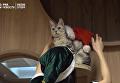 В Украину бы. В Японии появилось антистрессовое кафе с кошками. Видео