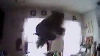 Попытка американской полиции поймать белку