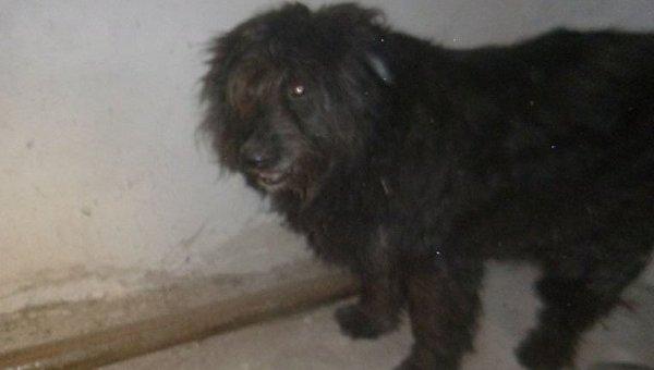 Собака, скончавшаяся после взрыва петарды в Киеве