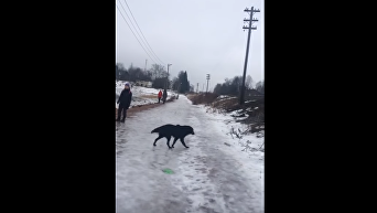 Не дождался МЧС. Россиянин спас собаку, провалившуюся под лед. Видео