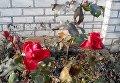 В Днепре расцвели розы среди января