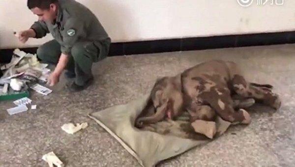 В Китае спасли слоненка, сорвавшегося в 60-метровую пропасть