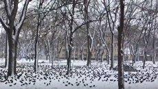 В Одесской области — аномальное нашествие скворцов