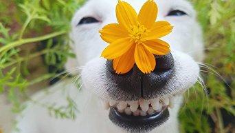 Собака-улыбака из Таиланда стала новым хитом сети