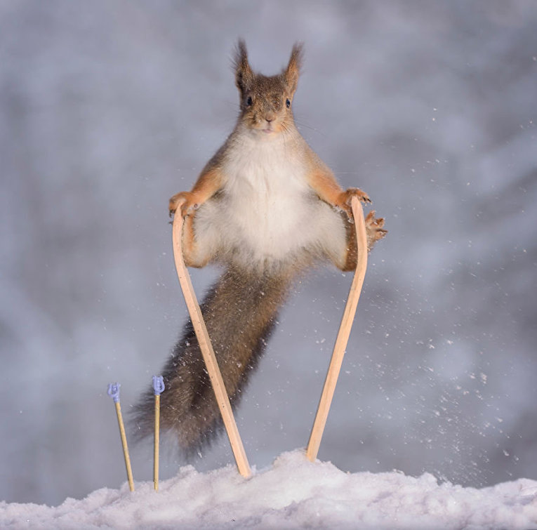 Олимпиада среди белок в объективе фотографа Герт Вегена