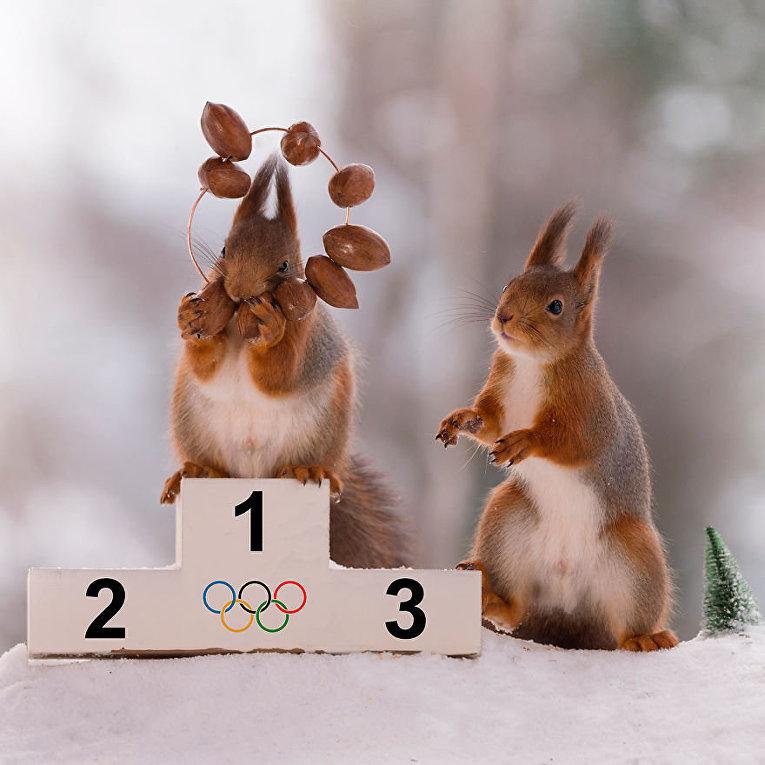 Олимпиада среди белок в объективе фотографа Герта Вегена