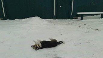 В Сумах по всему городу начали находить трупы собак