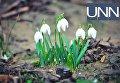 В Ужгороде из-за аномально-теплой погоды в феврале зацвели первые весенние цветы