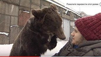 Дрессировщика в инвалидном кресле возит по Москве медведь