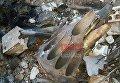 На месте сбитого российского Су-25 в Сирии