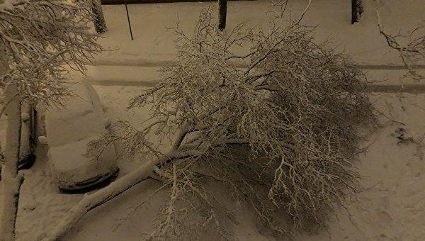 Масштабный снегопад во Львове