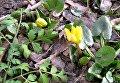 В Днепре распустились растения и цветы