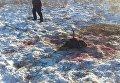 В Житомирской области браконьеры убили краснокнижного лося