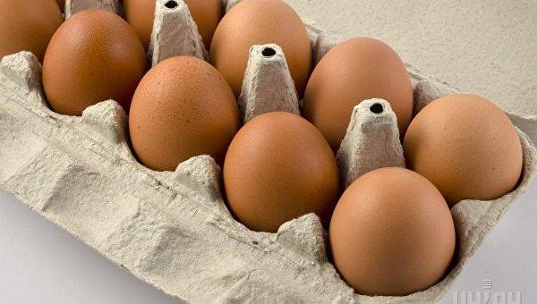 Яйца. Продукты питания