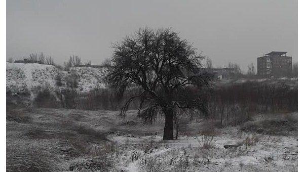 Тарасова груша в Запорожье
