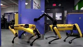 Роботы-собаки сбежали из лаборатории в США